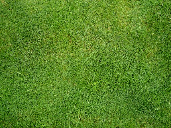 slika trave